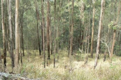 Open-Grassy-Forest-2
