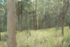 Open-Grassy-Forest